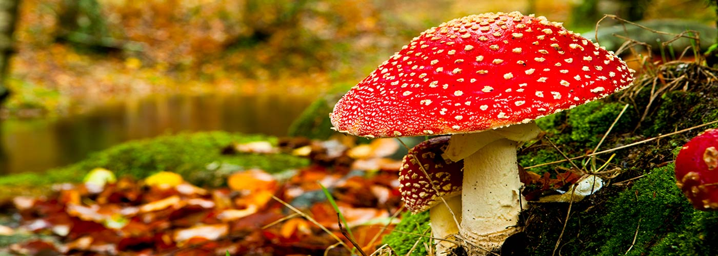 Are Hallucinogens Safe to Use?