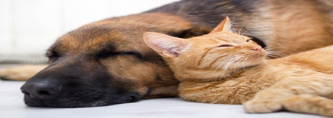 Can a Pet Help You Stay Sober?
